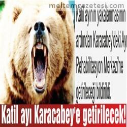 Katil ayı Karacabey'e getirilecek!