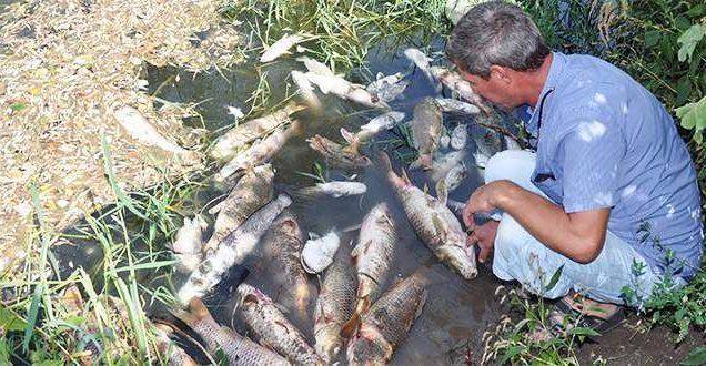 Karacabey'de balık katliamı sürüyor