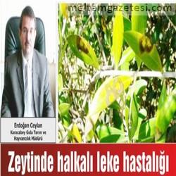 """""""Zeytin Halkalı Leke Hastalığı""""  ile mücadele zamanı"""