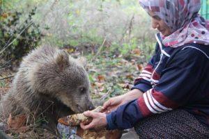 Yavru ayılar ballı ekmekle besleniyor