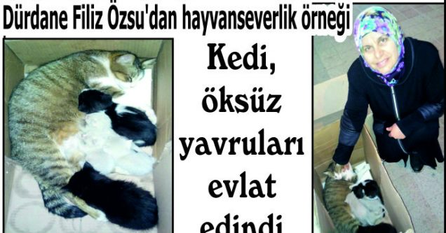 Kedi, öksüz yavruları evlat edindi