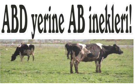 ABD yerine AB inekleri!