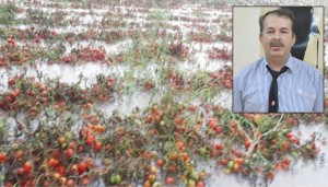 Ata: Çiftçinin yarası, geçici çözümle kapanmaz!