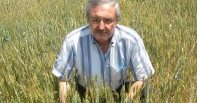 Buğdayda yüksek rekolte bekleniyor