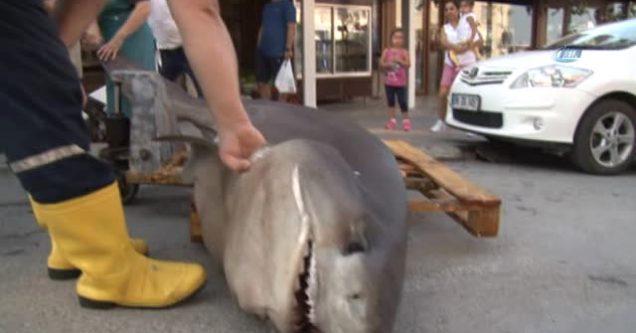 Karacabey Boğazı'nda dev köpek balığı