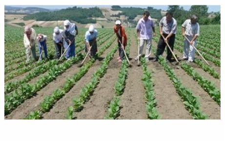 Çiftçiye prim müjdesi