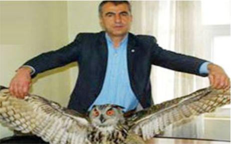 Dev baykuş Karacabey'e gönderildi
