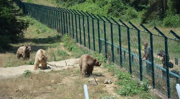Karacabey'de 5 yılda 564 yaban hayvanı tedavi gördü