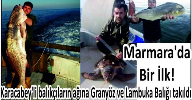 Karacabey'li balıkçıların ağına Granyöz ve Lambuka Balığı takıldı