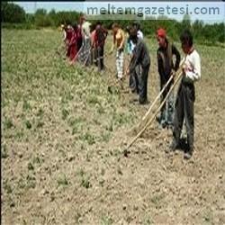 10 çiftçiden 8'ini kuraklık vurdu