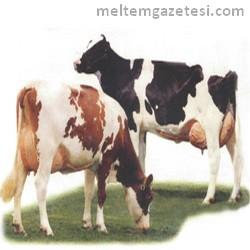 Süte kuraklık zammı
