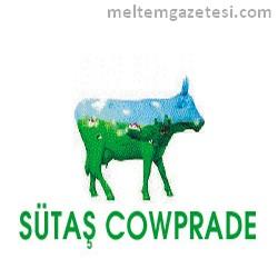 Sütaş inekleri kazandırıyor