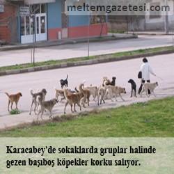 Sokaklar başıboş köpeklerle dolup taşıyor