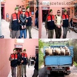 Jandarmadan hayvan hırsızlarına geçit yok