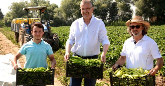 Karacabey'de çiftçi biberden umutlu