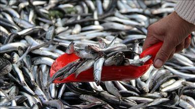 Balık fiyatları kırmızı etle yarışır hale geldi